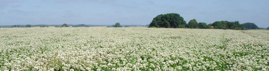 Stor pollenkilde er nødvendig for at få velfodrede laver. En stor kløvermark rundt om gården fungerer godt for mig.